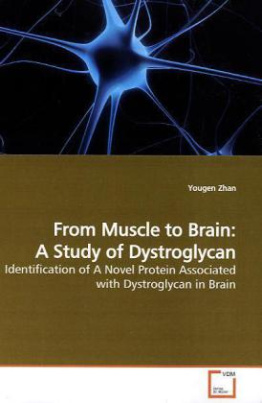 From Muscle to Brain: A Study of Dystroglycan