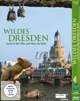 Wildes Dresden