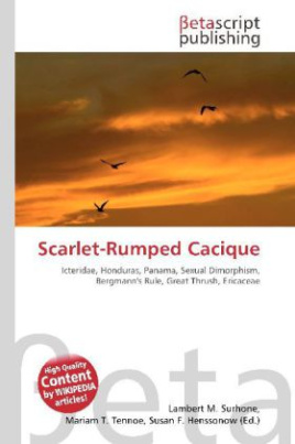Scarlet-Rumped Cacique