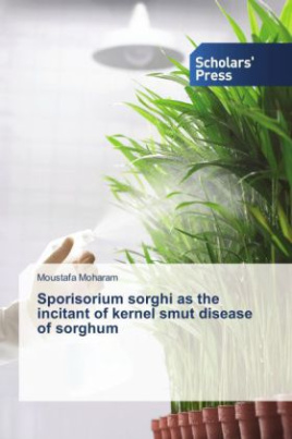 Sporisorium sorghi as the incitant of kernel smut disease of sorghum